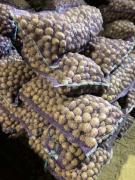 Seed potatoes, Gala variety